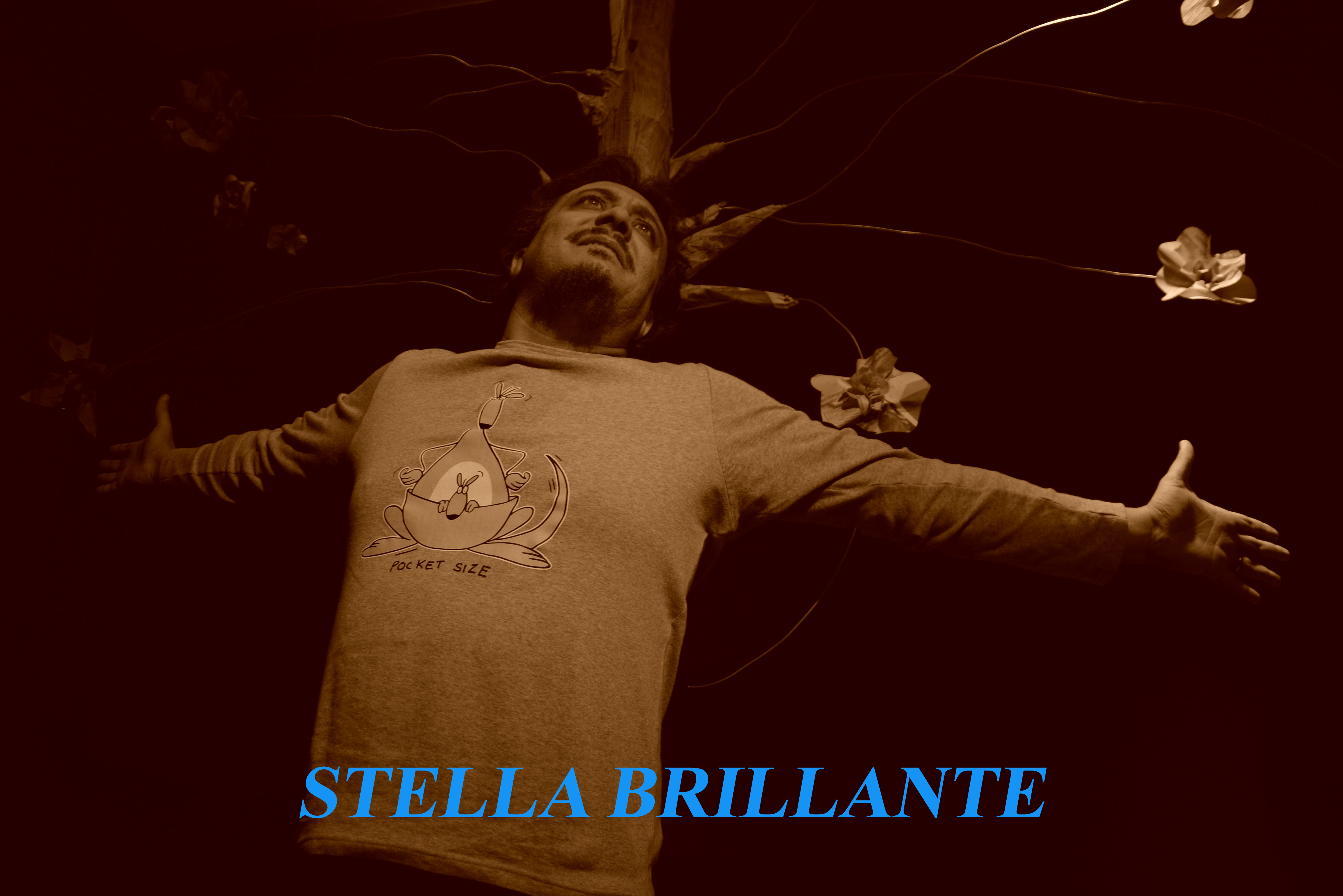 stella-brillante-1